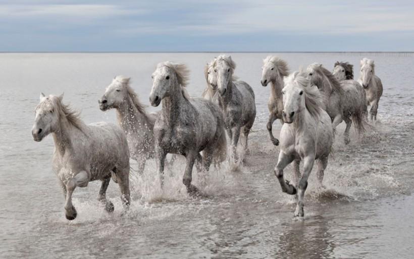 cropped-white-horses2.jpg