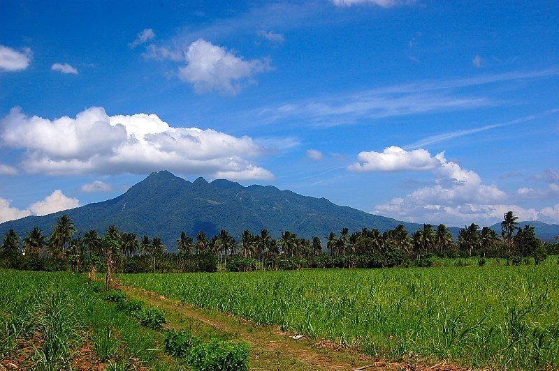 the enigmatic and miraculous MT> MAKILING.