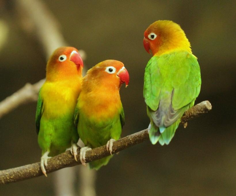 LOVE BIRDS4